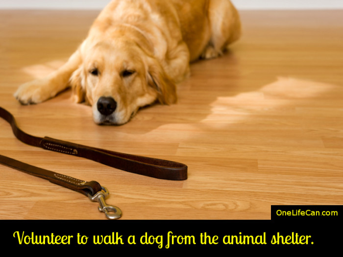 Mindful Act of Kindness - Volunteer to Walk a Dog from the Animal Shelter